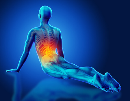 3D male medical figure with partial skeleton highlighted in yoga pose