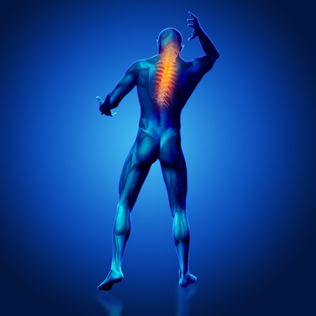 strong skeleton: 3D render of a male medical figure with spine highlighted Stock Photo