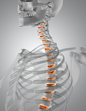 strong skeleton: 3D render of a close up of a spine in a skeleton with discs highlighted Stock Photo