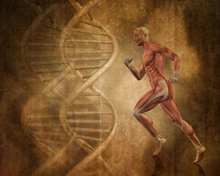 muscle anatomy: Grunge style background with 3D running man with muscle map and DNA strands