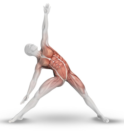 stretching: 3D render of a male medical figure with partial muscle map in yoga pose