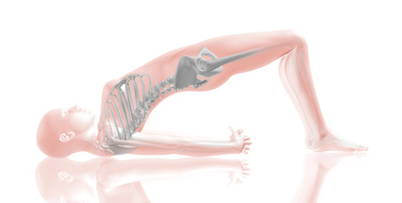 stretching: 3D render of a female medical figure with muscle map in yoga position