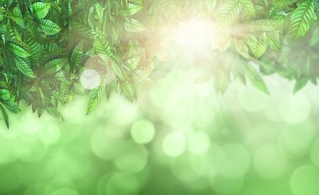 defocussed: 3D render of leaves against a defocussed background Stock Photo