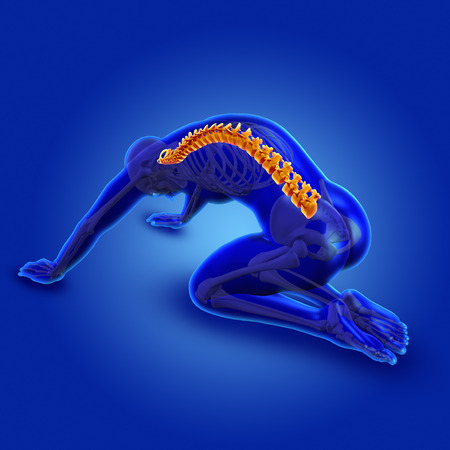 nude yoga: 3D render of a blue male medical figure in kneeling position with spine highlighted Stock Photo