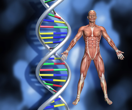 microcosmic: Colourful DNA strands on abstract background with a 3D male medical figure with muscle map
