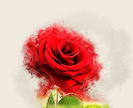 Image of red rose with grunge effect