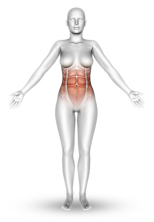 naked female: 3D render of a female figure with muscle map showing on torso
