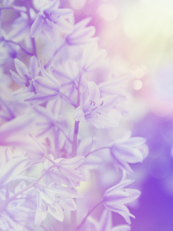 bluebell: Bluebell flowers with vintage effect
