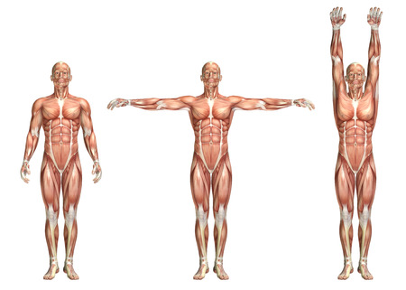 front of: 3D render of a medical figure showing shoulder abduction and adduction Stock Photo