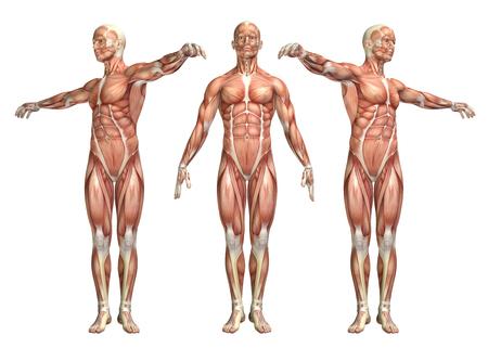 体幹回旋運動を示す医療図の 3 D レンダリングします。