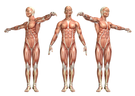 3D render of a medical figure showing trunk rotation