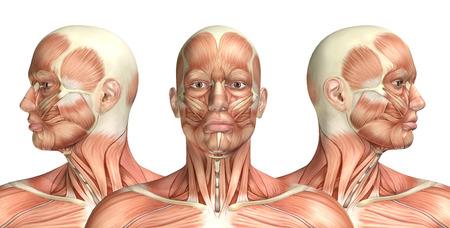 muscular: 3D render de una figura m�dica mostrando rotaci�n cervical