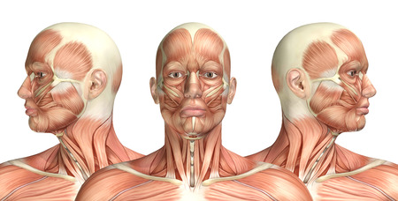 anatomie humaine: Rendu 3D d'une figure médicale montrant la rotation cervicale Banque d'images