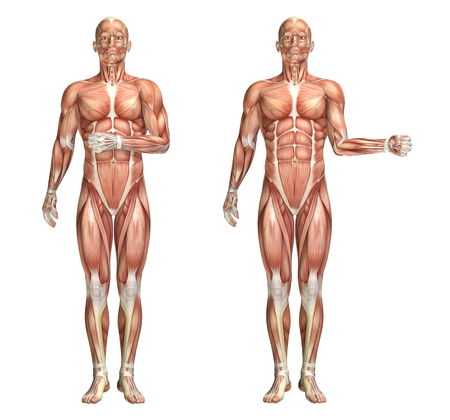 3D render of a medical figure showing shoulder internal and external rotation Stock Photo
