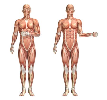 external: 3D render of a medical figure showing shoulder internal and external rotation Stock Photo