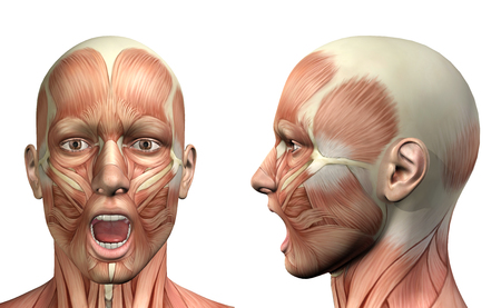 flesh: 3D render of a medical figure showing mandible depression front and side view