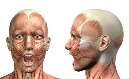 3D render van een medische figuur die onderkaak depressie voor- en zijaanzicht Stockfoto
