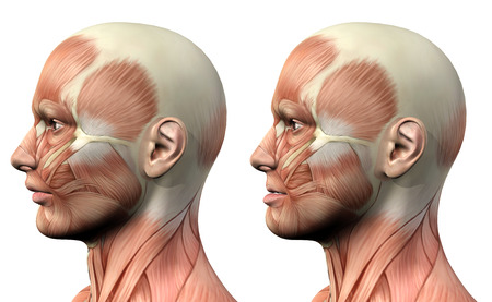 muscular men: 3D render of a medical figure showing mandible protusion and retrusion