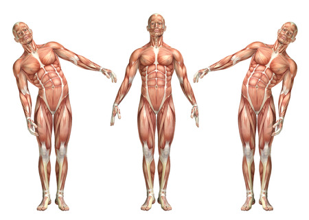 3D render of a medical figure showing trunk lateral bending