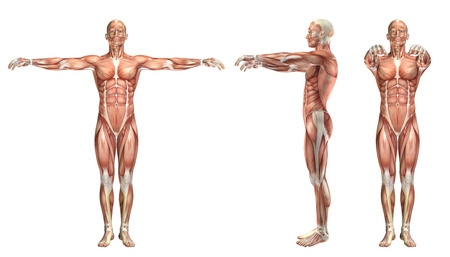 abduction: 3D render of a medical figure showing shoulder horizontal abduction and adduction Stock Photo
