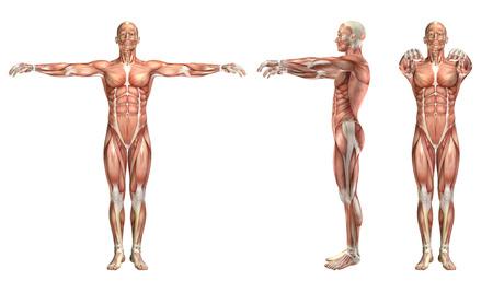 3D rendering di una figura medica che mostra spalla abduzione orizzontale e adduzione Archivio Fotografico - 46518190