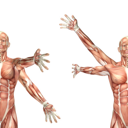 anatomically: 3D render of a medical figure showing shoulder circumduction
