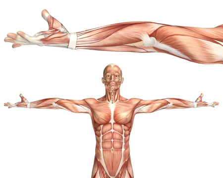 3D render of a medical figure showing elbow supination