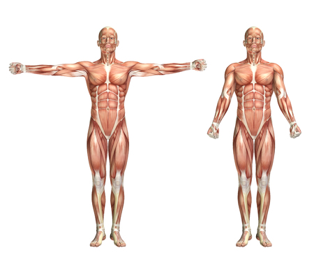 muscle anatomy: 3D render of a medical figure showing shoulder scaption Stock Photo