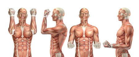 3D render of a medical figure showing elbow flexion and extension 写真素材