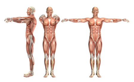 human figure: 3D render de una figura médica mostrando la abducción del hombro y el secuestro horizontal