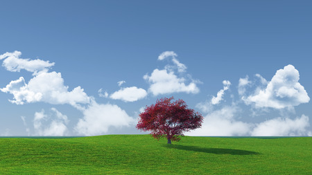 maple tree: 3D render of a maple tree landscape