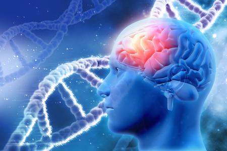 adn humano: Fondo médico 3D con cabeza masculina con el cerebro y el ADN de hebras