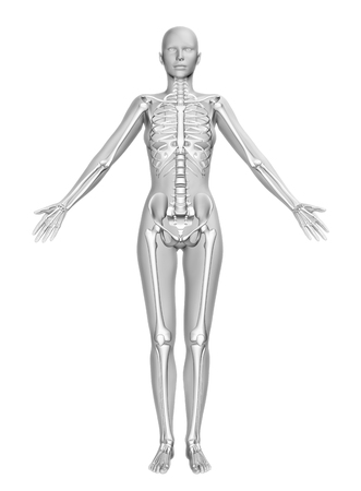 cg: 3D render of a female figure with smooth skin and skeleton in standing pose Stock Photo
