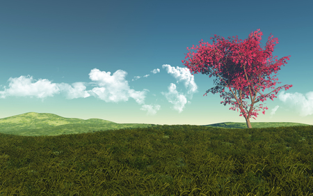 maple tree: 3D render of a maple tree in a grassy landscape Stock Photo