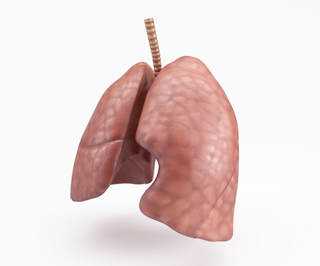 personne malade: 3D Render of Healthy Human Lungs Banque d'images