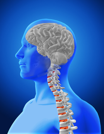 spine x ray: 3D render of a medical image showing spine and brain in a male figure