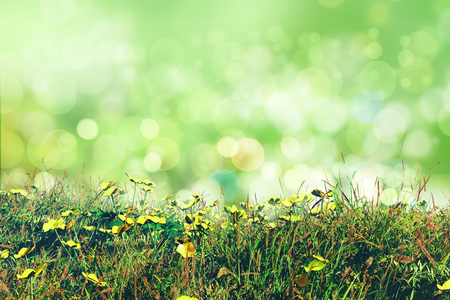 calmness: 3D render of buttercups and grass on a bokeh lights background Stock Photo