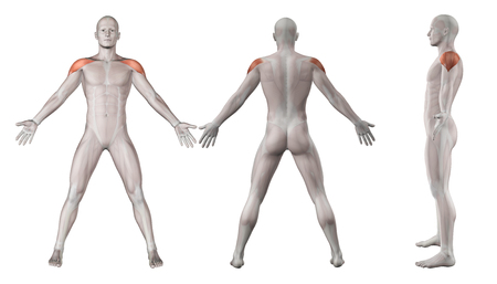 naked male body: 3D render showing showing male figure with deltoid muscles highlighted