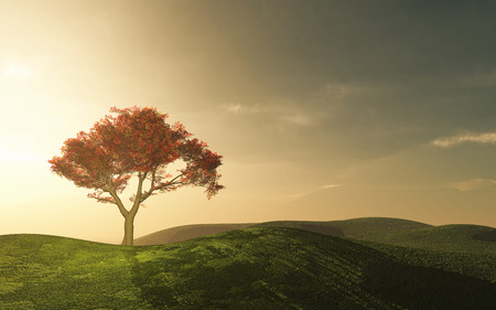 maple tree: 3D landscape with a tree