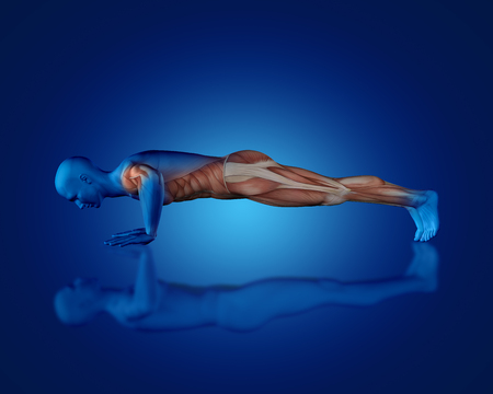 physiology: 3D render of a blue medical figure with partial muscle map in push up position