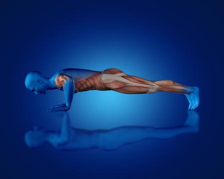 3D rinden de una figura médica azul con un mapa parcial del músculo en la posición de empuje hacia arriba