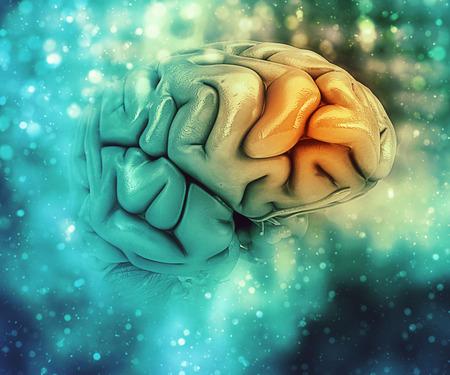 3D medische achtergrond met hersenen met frontale kwab gemarkeerd Stockfoto
