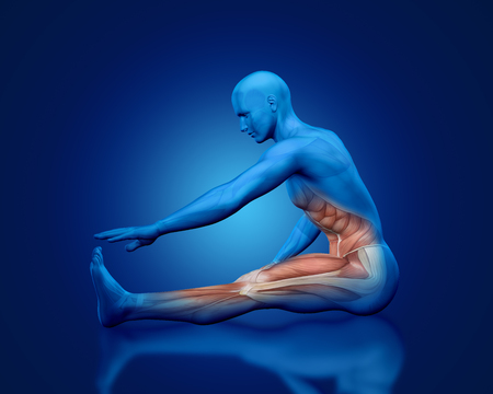 abdominis: 3D blue male medical figure with partial muscle map in stretching pose Stock Photo