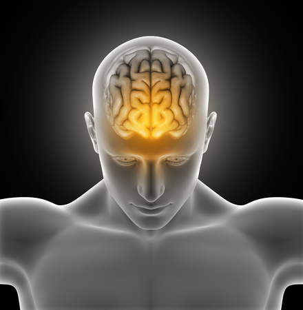 male figure: 3D render of a medical image of a male figure with brain highlighted Stock Photo