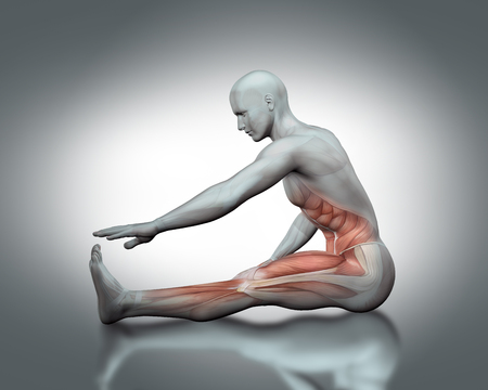 partial: 3D male medical figure with partial muscle map in stretching pose