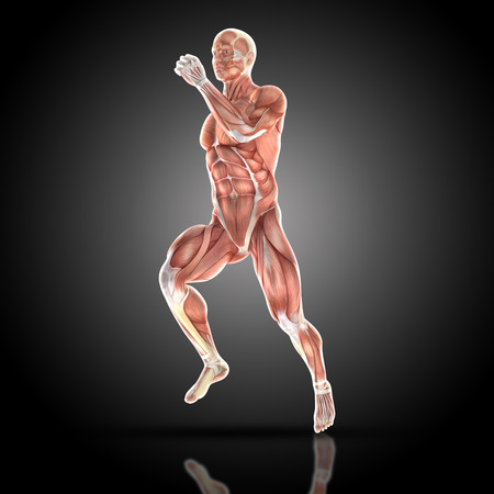 abdominal muscle exercises: 3D render of a medical figure bodybuilder with muscle map in a running pose