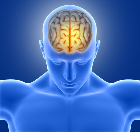 microcosmic: 3D render of a medical image of a male figure with brain highlighted Stock Photo