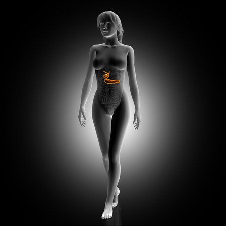 biliary: 3D render of a female medical figure with biliary highlighted