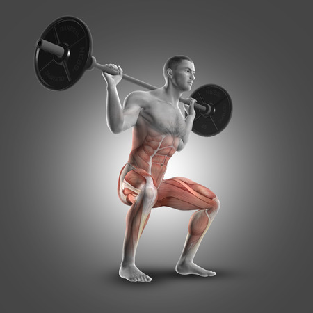 flexion: 3D render of a male figure in a barbell squat highlighting the muscles used