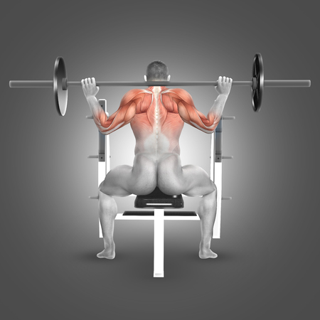 flexion: 3D render of a male figure in seated barbell press behind neck position with muscles used highlighted